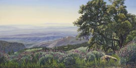 Figueroa Mountain View with oaks and Lupine